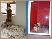 Dog Grooming West Pensacola, Cat Boarding West Pensacola, Dog Boarding Brent, Dog Grooming Brent, Cat Boarding Brent